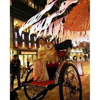 """LOVE my Tokyo・柴犬, Shiba Inu <3 ~lisa. """"Sakura festival in Nihonbashi, TOKYO.日本橋の桜祭りに参加してきたよ〜*\(^o^)/* 日本橋で幻の桜を探すゲームがあるからみんなもやってみてね。あとね、等身大まるパネルが日本橋のどこかにあるから まる発見 してみてね!きっと良いことあるから。3月20日のお昼ぐらいにまるも実際に探しにいくからみんなも来ちゃえば?""""(c) Nihonbashi, Tokyo"""