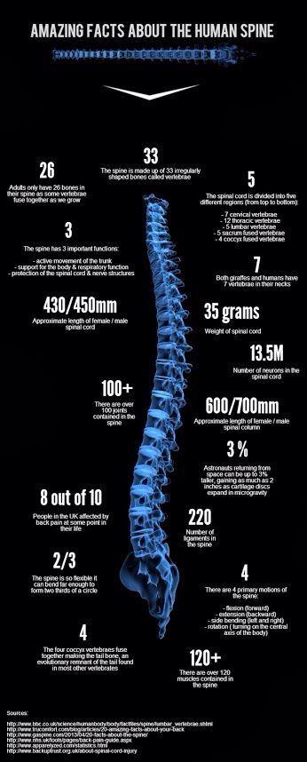 The spine is amazing  Lexington Family Chiropractic 131 Prosperous Pl #15 Lexington KY 40509