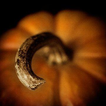 Pumpkin Photograph - First Light PHoto via Etsy #fpoe