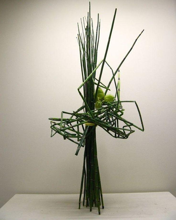les 25 meilleures id es concernant equisetum sur pinterest bambou en pot queue de cheval. Black Bedroom Furniture Sets. Home Design Ideas