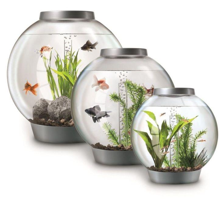 25 best ideas about biorb fish tank on pinterest fish tank 1 gallon fish tank and fish tanks. Black Bedroom Furniture Sets. Home Design Ideas