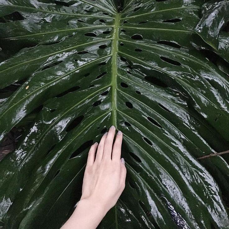 Sayang pohon sayang tanaman makasih buat udara yang sejuk dan oksigen untuk paru-paru kita