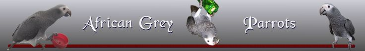 African Grey Parrot - Toxic Foods for your African Grey