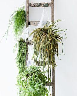 il priscio del design: Giardini verticali fai da te
