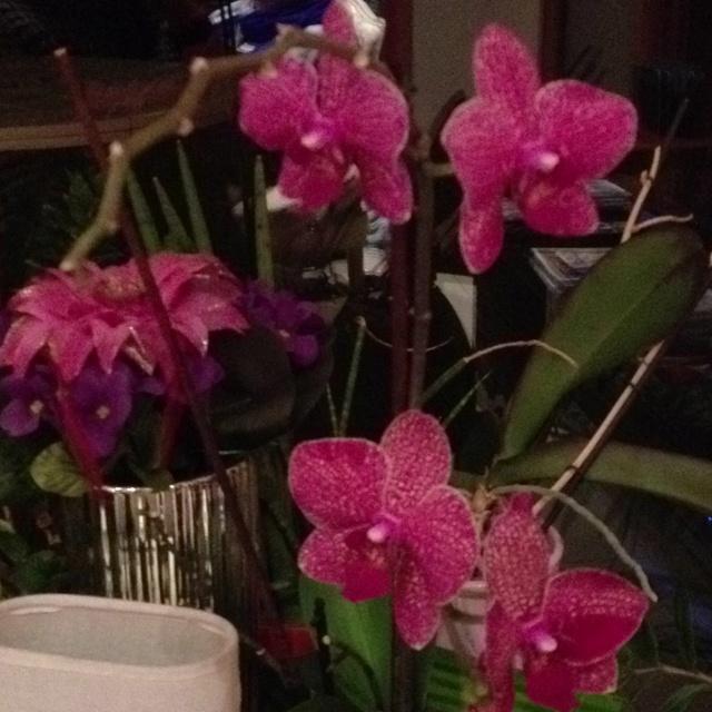 Mes Orchidées, trop fier :)