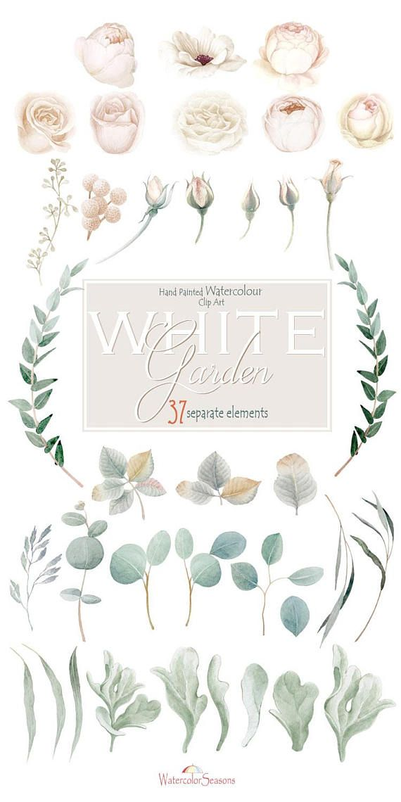 White Garden Watercolor Clipart Collection Flowers Separate