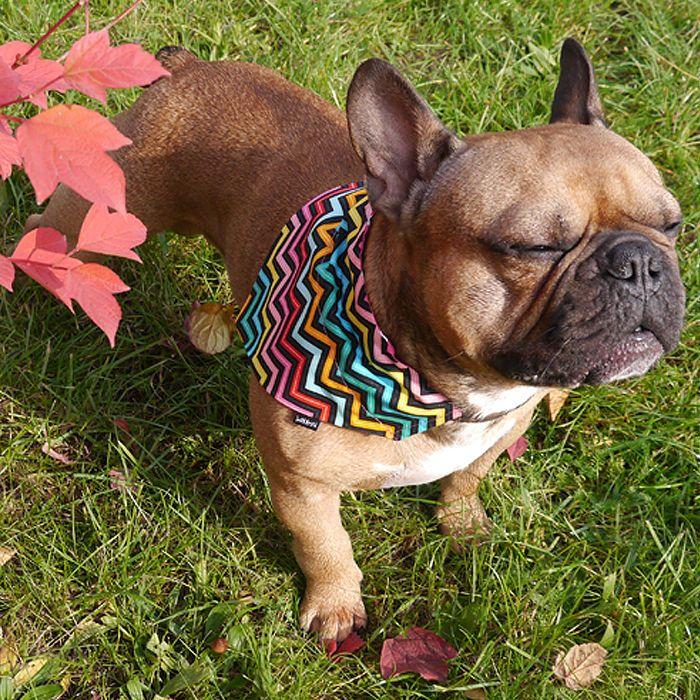 Bandanka z imieniem Psa, personalizowana apaszka z napisem, prezent dla psa, model Tęcza Psiakrew – Cena | sklep internetowy Psiakrew