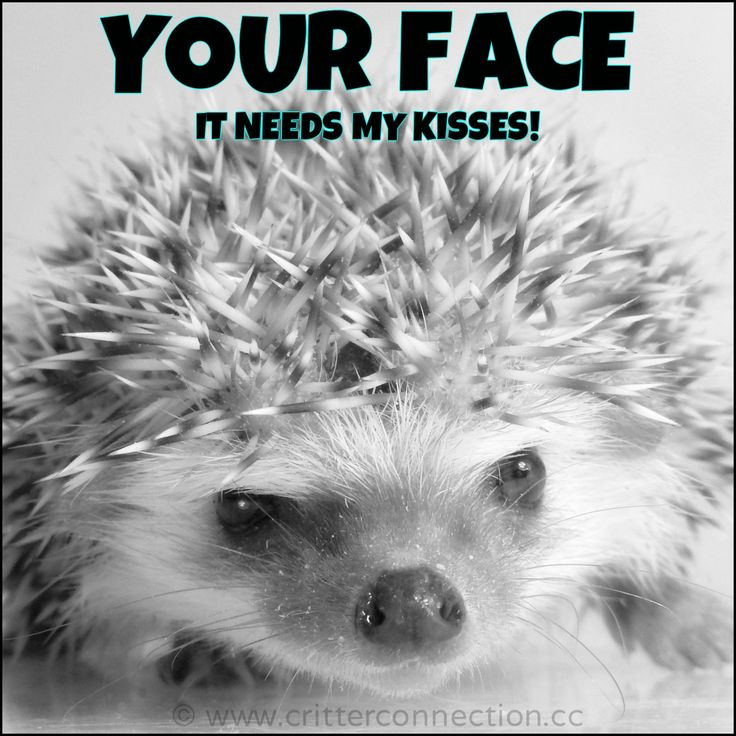 Your face... it needs my kisses!