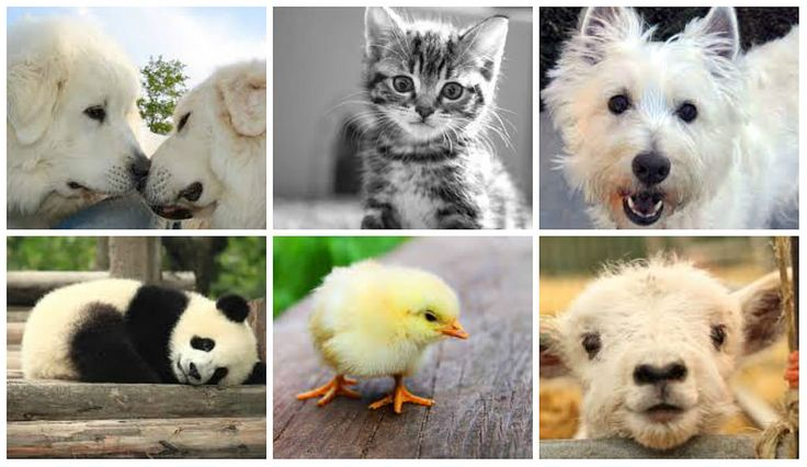 Here are the top 10 popular funny animal videos of the month on our site! Enjoy.