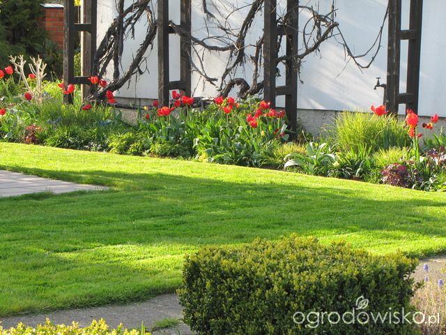 Pokażę nasz ogród - strona 318 - Forum ogrodnicze - Ogrodowisko