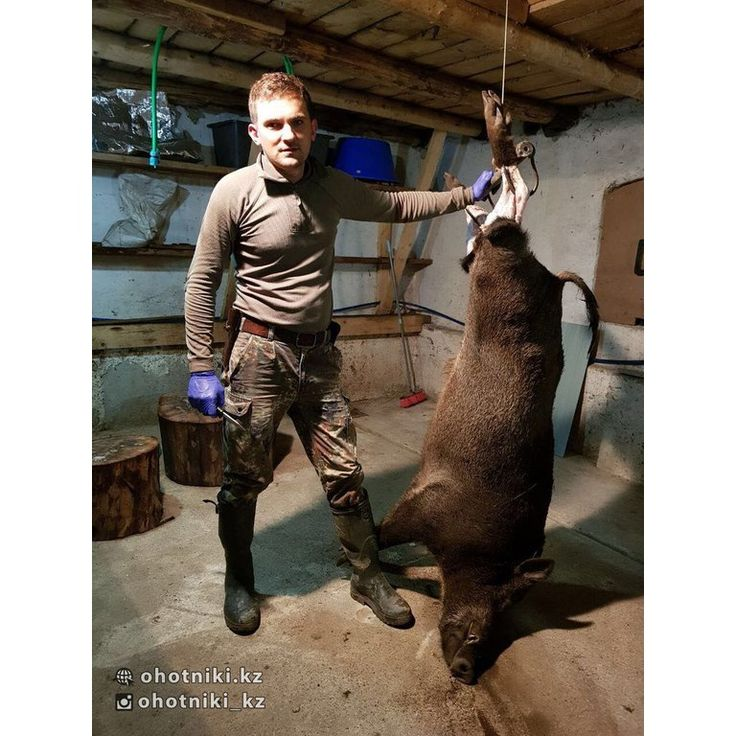 Охота на кабана в Калининградской области. От участника #Охотникикз @nikitos1. #охота #охотанакабана #охотникикз #ohotnikikz