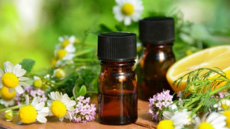 Proceso de Extracción de Aceites Esenciales Aromáticos  - TvAgro por Jua...
