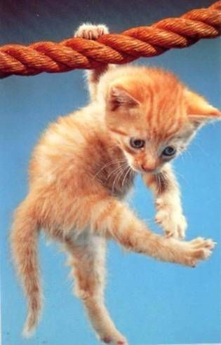 care after declawing kitten