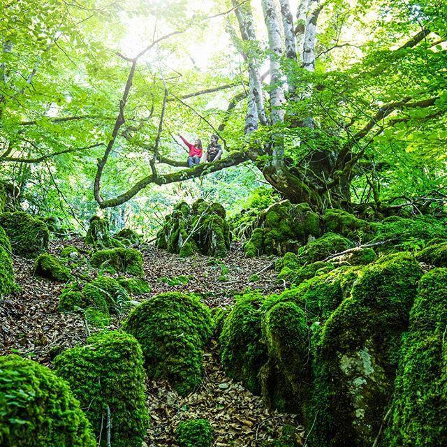 En Navarra, este increíble bosque de hayas y abetos es uno de los mejor conservados de Europa, además de uno de los más extensos. Esta es la #SelvadeIrati Xavier Arnau / iStock Vía @revista_viajar / Instagram