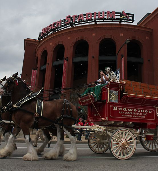 Photos: Budweiser Clydesdales at St. Louis opener ...