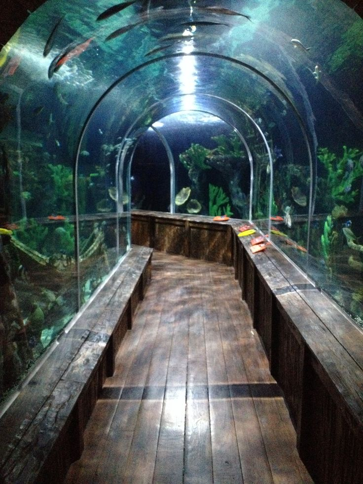 17 Best Images About Indoor Aquariums On Pinterest