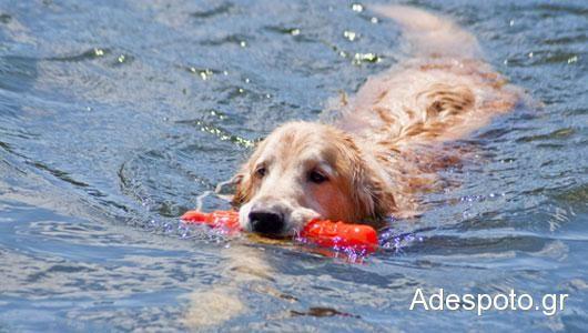 Υγεία των ζώων: Πλαστικά παιχνίδια σκύλων μπορεί να περιέχουν τοξικά χημικά