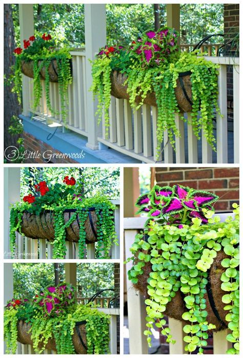 Hanging Flower Baskets Seattle : Best ideas about front porch planters on
