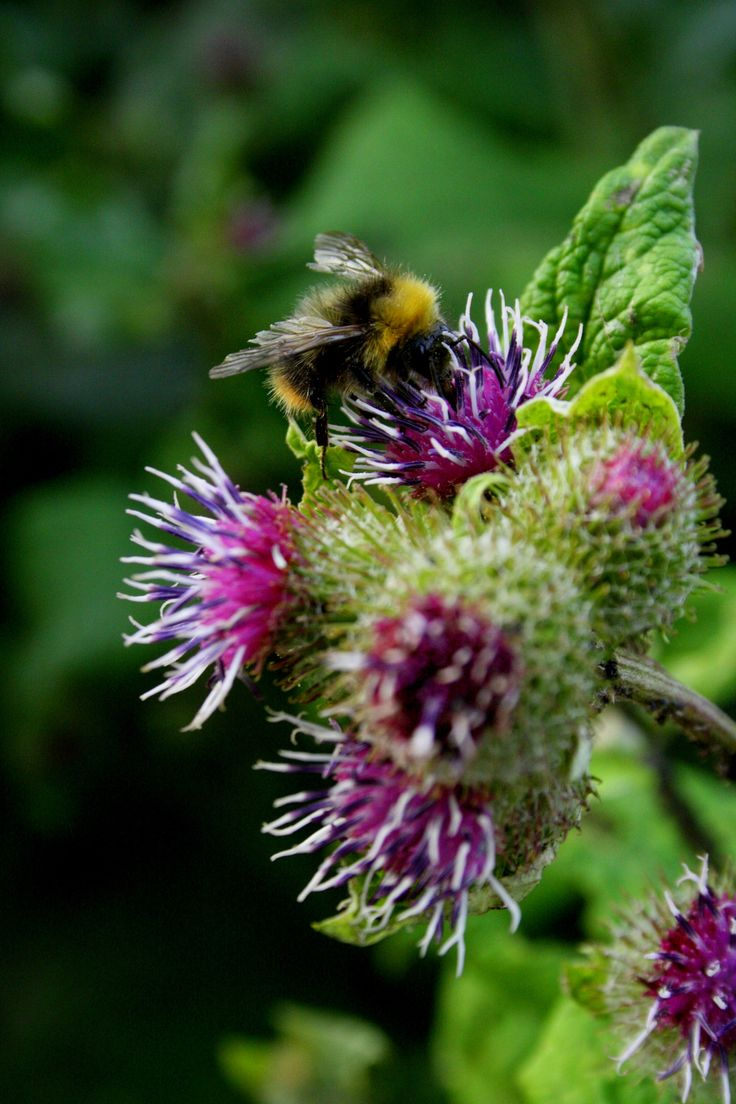 1139 best bee love images on Pinterest   Bees, Bumble bees and Honey ...