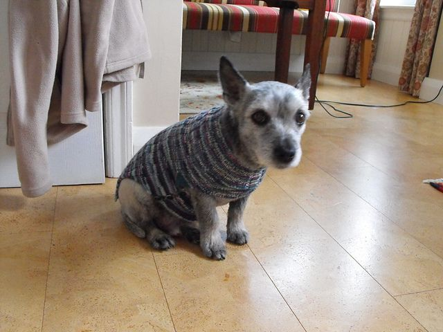 Ravelry: mactosh's Scout's sweater