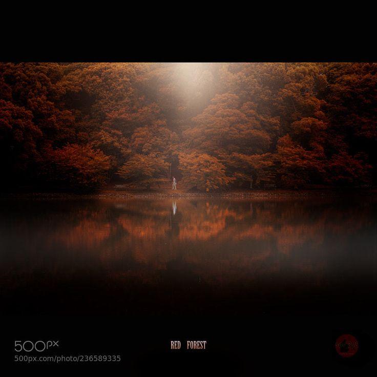 紅い森 by KiyoshiIida