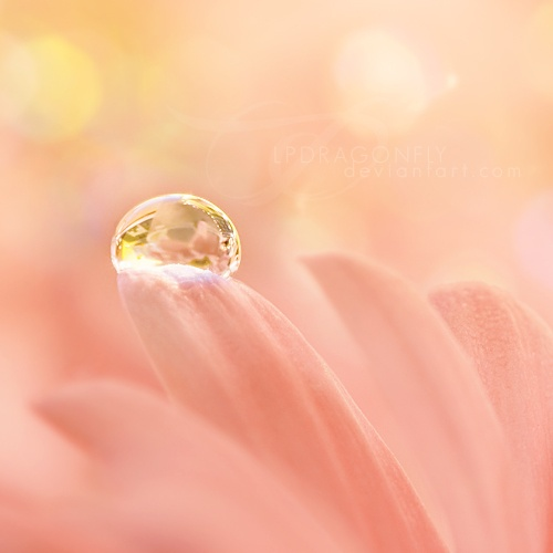 Dewdrop on pink flower petals - notice the tiny reflections