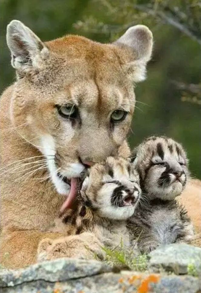 That's me with my babies... I will protect them with my last & I do mean last dying breath. I actually would feel bad for that scum if it ever happen. Sorry not sorry...
