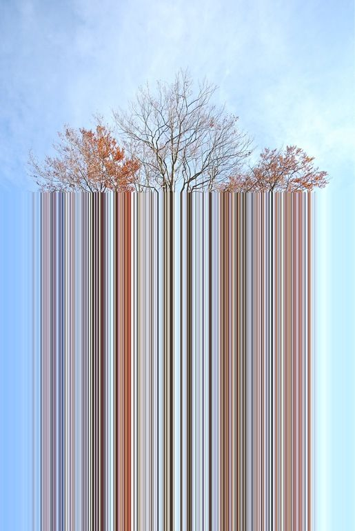 "Alberto Baldelli; Computer Art, 2011, New Media Art ""Tree Code"""