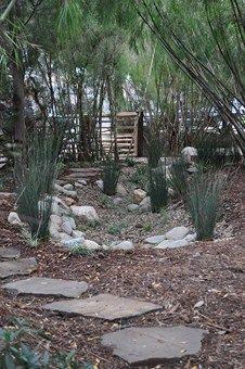 142 best Rain Garden images on Pinterest Landscaping ideas