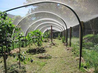Badger Farm Bird Netting For Fruit Trees Just Stuff