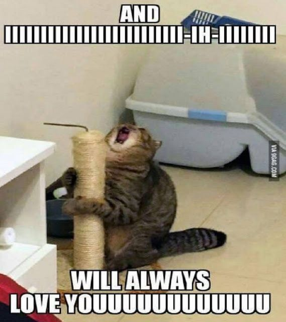 20 Funny Animal Pictures You Can't Promise Not To Laugh At