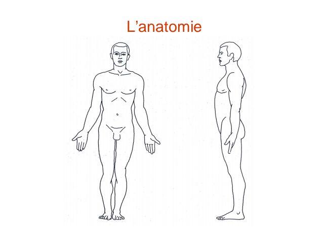 Généralités en anatomie- Cours de Anatomie PCEM 1 (1ère année) Médecine
