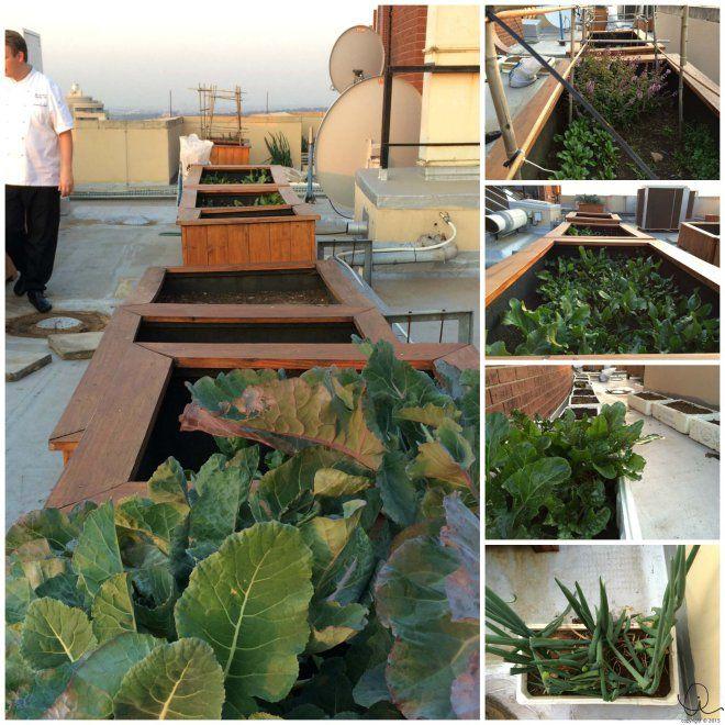 54 on Bath's roof-top herb garden