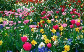Resultado de imagen para flori de camp imagini