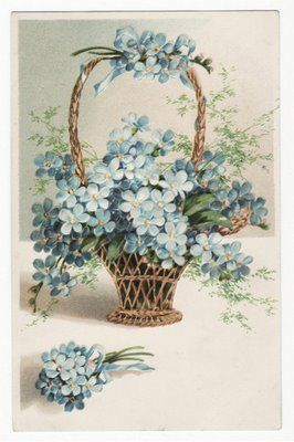 Basketful of forget-me-nots