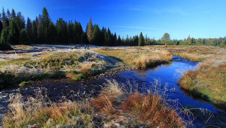 Na soutoku Roklanského potoka a Rokytky, Šumava