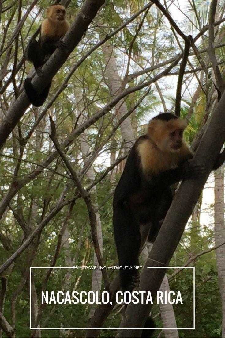 Monkeys At The Hidden Beach Nacascolo Costa Rica Centralamerica Travel Costarica