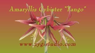 zygistudio - YouTube