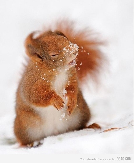 Frost Bitten: Laughing, Coversquirrel, Funnies Animal, Animal Photo, Giggl, Funnies Things, Covers Squirrels, Red Squirrels, Funnies Stuff