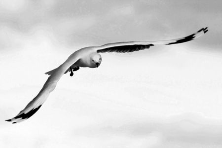 Interior Design and Home Decoration Artwork from Art Australia - buy this original signed print in 3 sizes.  Elegant Gull by David Rennie via http://www.art-australia.com/elegant-gull-by-david-rennie/
