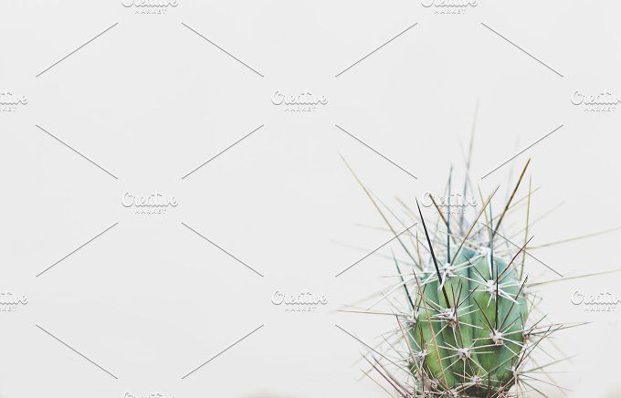 Spiky cactus by René Jordaan Photography on @creativemarket
