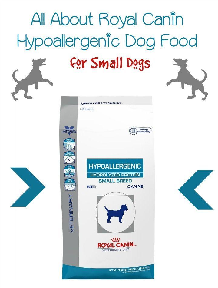 best 25 hypoallergenic dog breed ideas on pinterest. Black Bedroom Furniture Sets. Home Design Ideas