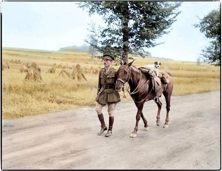 WW1, 25 August 1916; British captain leads horse with dog near Amiens, France…                                                                                                                                                                                 More