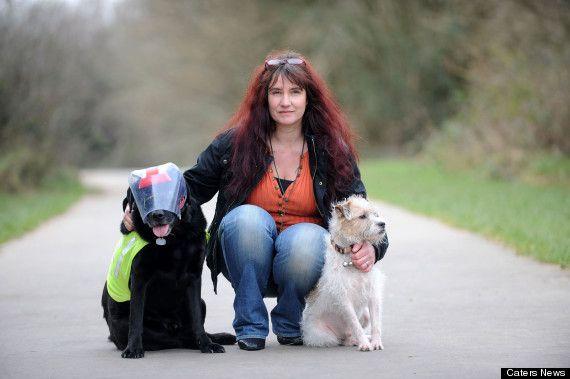 Un chien d'aveugle guide un chien aveugle