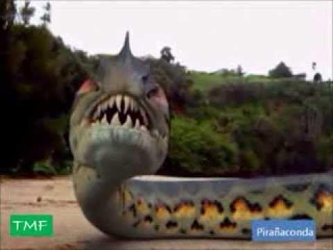 Die besten 25+ megalodon Beweise Ideen auf Pinterest | Megalodon echt, Megalodon und megalodon ...