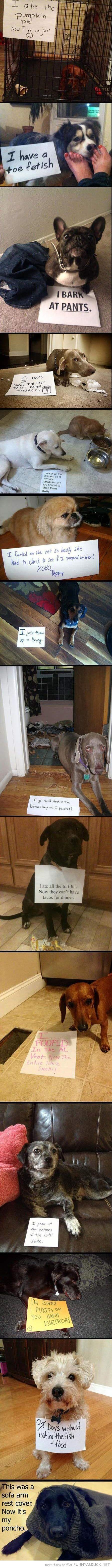 dog animal shaming confession signs compilation