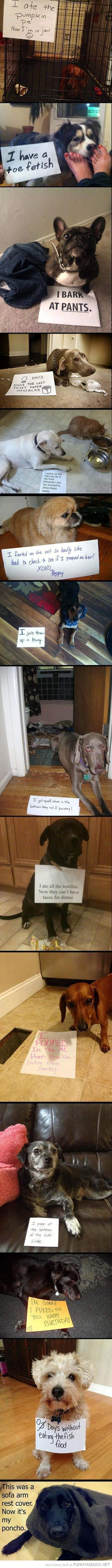 dog animal shaming confession signs compilation funny pics pictures pic picture image photo images photos lol