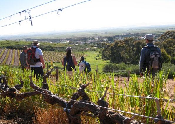 A Walk to Remember, Ormonde Vineyards, Cape West Coast.