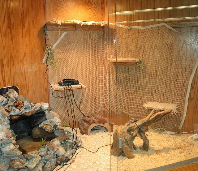 About Iguana   Iguana Guide   Iguana Tips: Tips and tricks in building an iguana cage