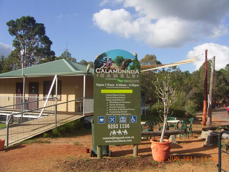 Camel Farm Paulls Valley Western Australia( Perth Hills)